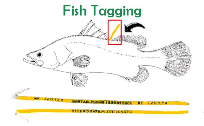 fishtagging